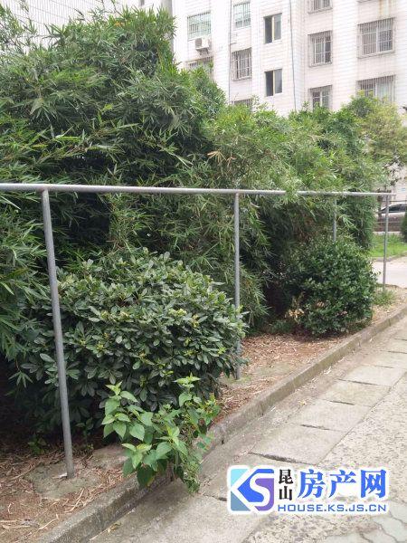 樾城花园 市政府对面 黄金地段 20平米南花园 全新装修