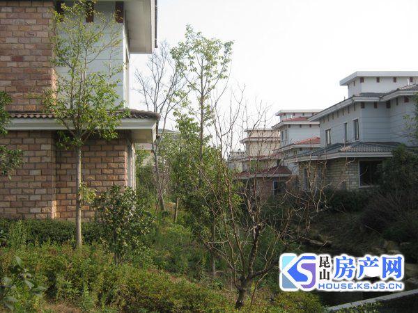 大上海、双湖湾旁双拼的价格650万买丰泽园独栋 大花园位置好,看房方便!